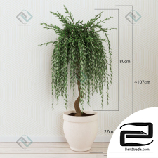 Willow decorative Decorative willow