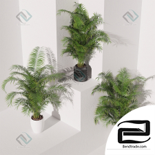 Areca Palm Pack plant collection